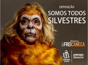 Artistas viram animais silvestres em prol da fauna brasileira