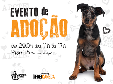 Shopping Frei Caneca promove evento de adoção de cães abandonados